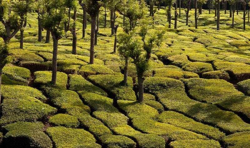 Splendours Of South India