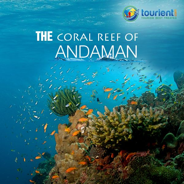 Andaman Ltc Tour Package From Anand