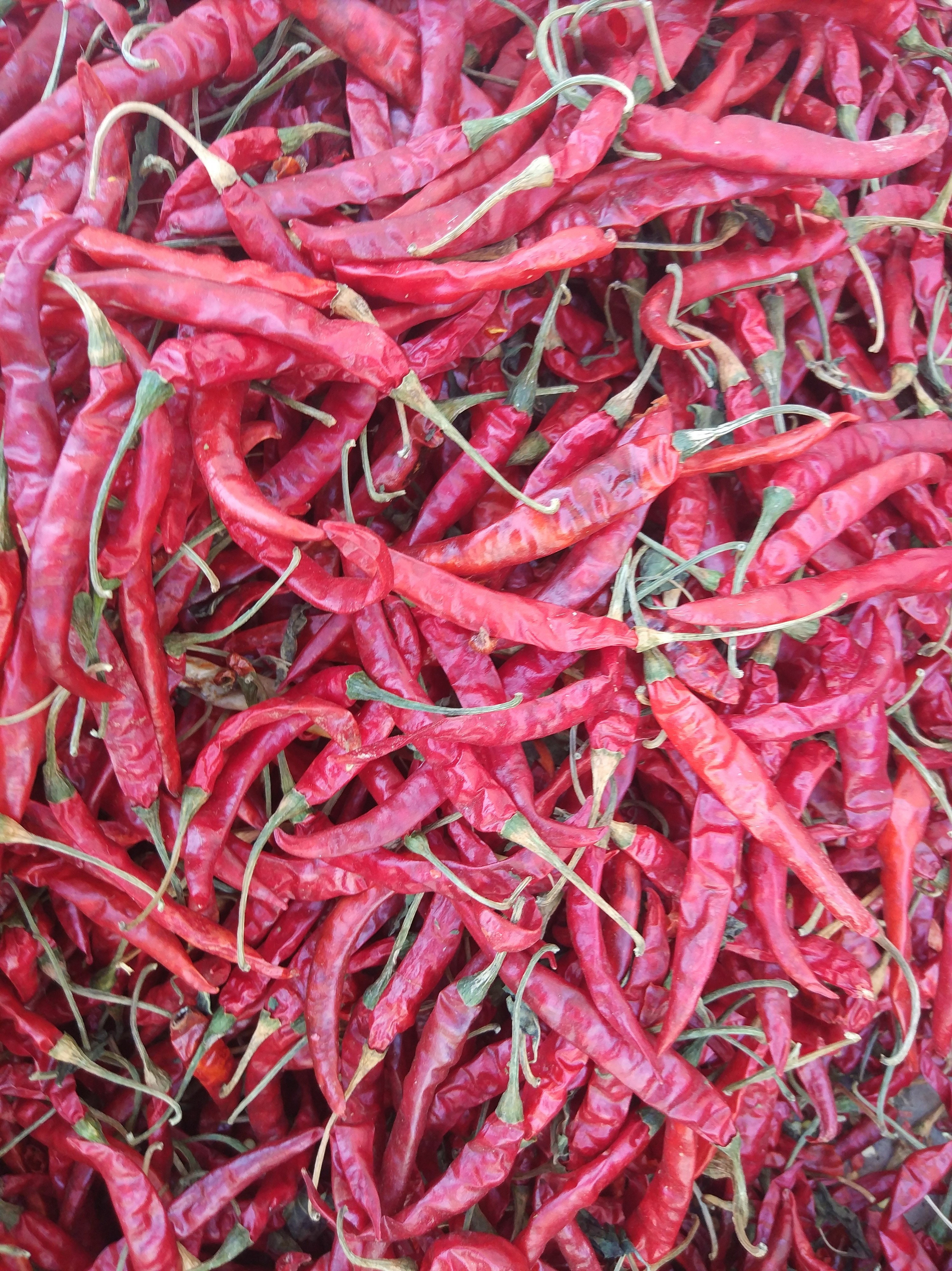 It is is long and has a thin skin, and when it's dried has a crinkly appearance. It is known for its colour and pungency and is consumed across India. Long, fully wrinkled, less seed, dark red colour