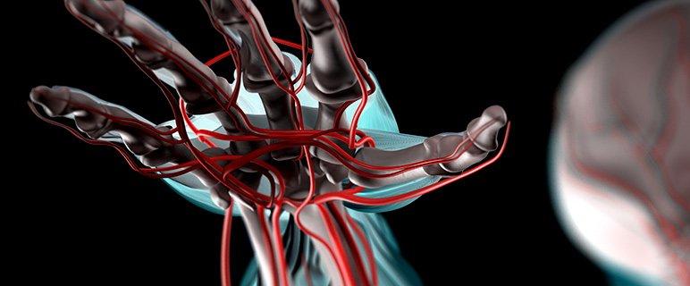 Vascular and Endovas