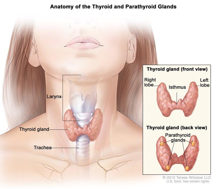 Thyroid disorders ca