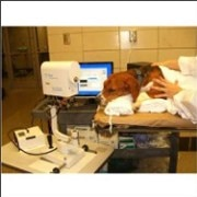 Dogs Clinic and Operation Theater