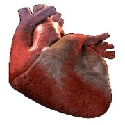 Cardiology(Heart Specialists)