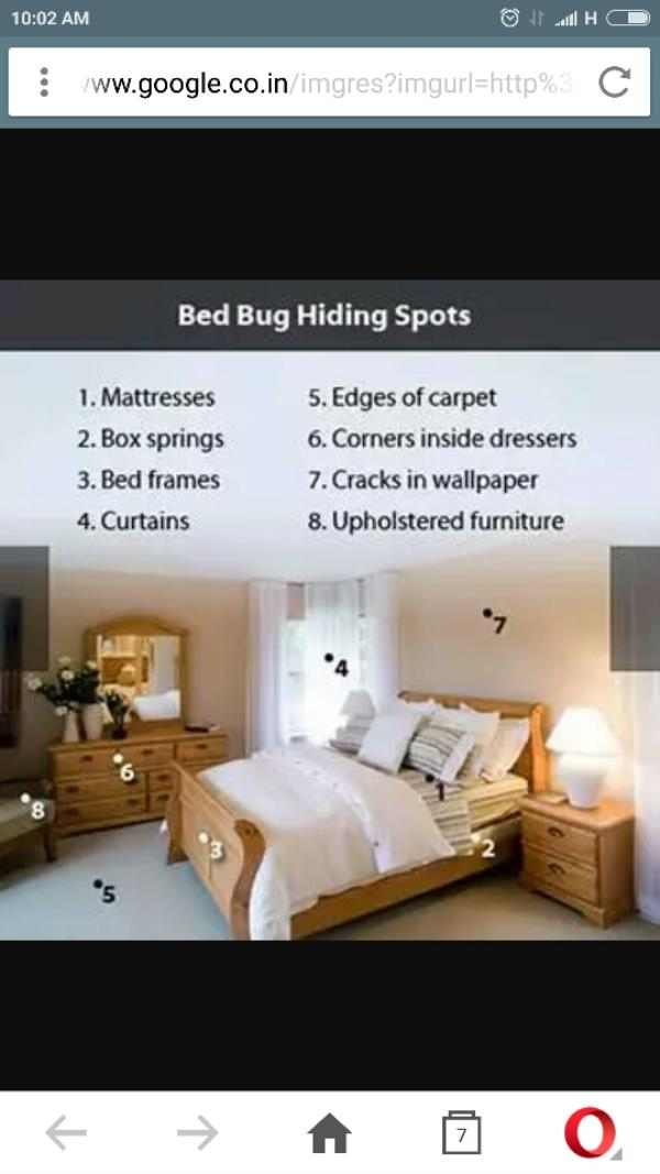BedBugs treatment