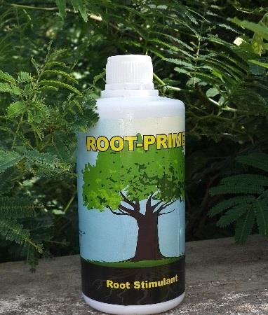 Root prime is a root