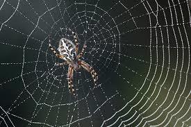 Spider Con