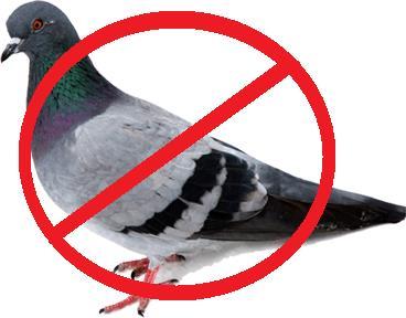 Bird Contr