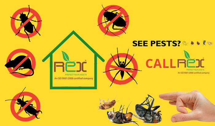 Bed Bug Control, termite Control, Bird Control from your House. We are Expert in Residential Pest Control Service .
