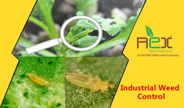 We are professinal Service Provider of Weed Control in Industrial Sector in Ahmedabad, surat, Baroda, rajkot  Weeds are generally as unwanted wild plants that  grow unwantedly  in industries, weeds may be trouble growing where no vegetation is desirable, weeds are in the playing fields, power lines, Drying yards, tank area, industries and unwanted plants serves as shelter for reptiles and rats.  Our Industrial Weed Control Service is basically the botanical part of pest control that uses chemical and physical methods to stop weeds from getting a mature stage of growth, when they could be harmful to livestock as well as trees and plants in garden. We are doing this treatment by spraying chemical on unwanted grass will dry out up to root. At present chemicals are mostly used to kill the weeds.  Industrial Weed Industrial Weed Control Service GujaratControl Service  are offered by our experts only when they identify root cause. They use effective steps to destroy weed colonies, our experts uses eco-friendly chemicals and is trained on latest technology and tools that are ready to give services. Our methods of industrial weed control service are easy less time-consuming and satisfactory services.  We also provide Industrial weed control services to agriculture farms, power projects, airports, railway tracks, industrial waste lands, farm houses, hospitals, hotels, selective weed control in crop fields and kitchen gardens, Industrial Weed Control Service  include the control of vegetation in utility substations, tank farm fuel storage facilities, pipeline valve and regulator sites, industrial storage areas, flood control dams, airport runways, lights and poles, along highways, and virtually any other area where vegetation must be aggressively controlled for regulatory and safety reasons including visibility, site security, fire prevention and structural integrity.  Industrial Weed Control Service are designed to minimize environmental impacts through the careful, experienced selection of treatment methods, timing and appropriate herbicides. This allows us to reduce the total volume of herbicides needed and protects non-target areas and species that also control trees, shrubs, and broadleaf weeds while leaving grass on desired areas.